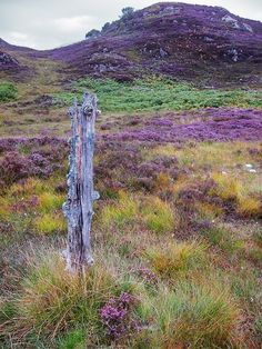 ༺✿༺ Heather in the Highlands of Scotland.
