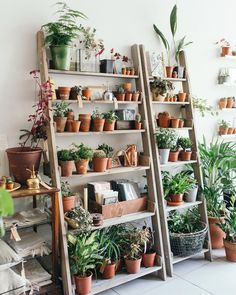 The #plantshelving at the shop photographed by @katebe_ . We'll be at @midcentury_modern in #Dulwich this Sunday for our 1st venture South of the river. I'm excited and can't wait to show South Londoners who haven't had a chance to visit the shop yet what we're all about. Come say hi, we'll be posting a link for discounted tickets to the show in the next few days too, so keep your peeled. @modernshows #modernshows #midcenturymodernshow.