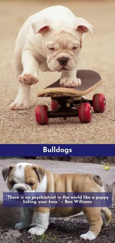 Follow the link for more Bulldogs Click the link to find out more