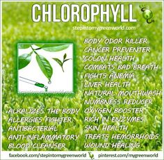 http://www.stepintomygreenworld.com/healthyliving/greenfoods/the-health-scavenger-to-the-rescue-wheatgrass/