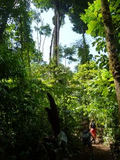 El Tigre Corcovado National Park trail opened in 2015!