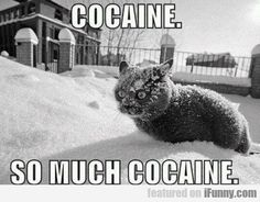Must be Charly Sheen's cat... or Lindsey Lohan's