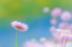 Ballade of Blue sky and a Flower by Shin stf