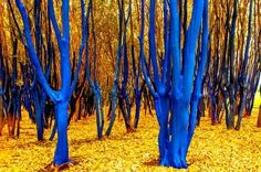 The Blue Trees   Houston, Texas USA. Kondimopoulos