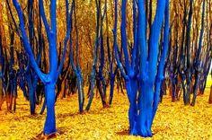 The Blue Trees | Houston, Texas USA. Kondimopoulos