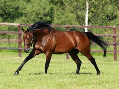 Sea The Stars, the world's best racehorse in 2009, topping both Rachel Alexandra (U.S. Horse of the Year) and Zenyatta (2009 Breeders' Cup Classic champion). In 2009 he was undefeated in six out of six starts, all Group Is, in at least three different countries.