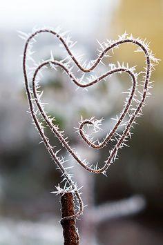 frosty heart . . .