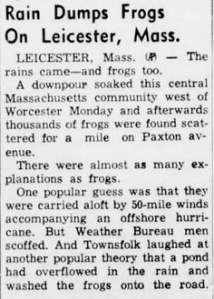 After a downpour in Leicester, Massachusetts, on September 7, 1953, thousands of frogs were found scattered on Paxton Avenue, apparently dropped in the rain.