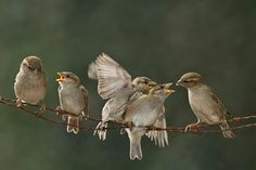 Vogels - Fotograaf Nunspeet Ernst Dirksen