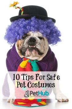 dog clown with title 10 tips for safe pet costumes Pet Home, Pet Costumes,