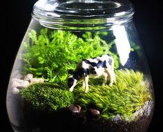 How to Make Your Own Terrarium. - Home decor wedding Terrarium succulentes Terrarium Diy, How To Make Terrariums, Terrarium Necklace, Terrarium Wedding, Mini Cows, Decoration Plante, Moss Garden, Paludarium, Unique Plants