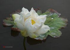 Автор фотографии - фотограф профессионал duong quoc dinh. Lotus. Страна Вьетнам. Город Bien Hoa.