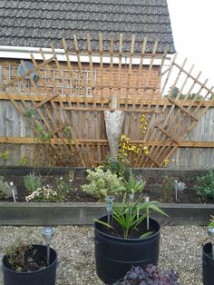 The new Trellis in the back garden almost Art Deco Style