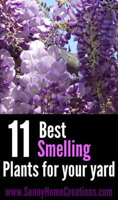 11 best smelling plants for your yard.