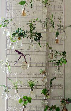 Lightbulbs vases.