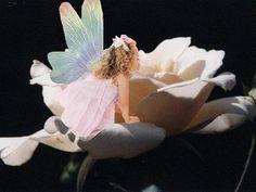 rose faerie