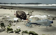A new study finds that biodegradable plastics might not be the environmental beacon we were looking for.  http://www.onegreenplanet.org/environment/biodegradable-plastic-is-making-us-produce-more-trash/?utm_source=Green+Monster+Mailing+List&utm_campaign=71fe3c2b07-NEWSLETTER_EMAIL_CAMPAIGN&utm_medium=email&utm_term=0_bbf62ddf34-71fe3c2b07-106143893