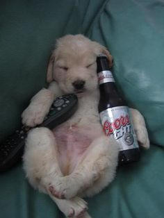 Puppy Bowl, morning after...