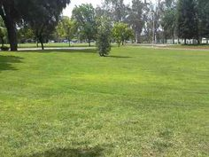 This is a little field at Merced College in Merced, CA. This picture was taken on my cell phone.