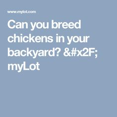 Can you breed chickens in your backyard? / myLot