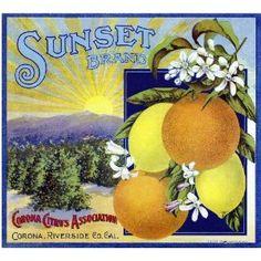 Lemon & oranges vintage fruit label design
