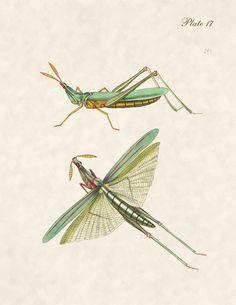 Vintage Antique Insect Art Print $10.00