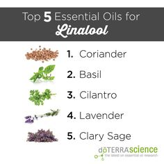Top 5 Essential Oils for Linalool
