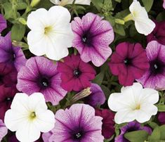 sangria bouquet | Sangria Flowers