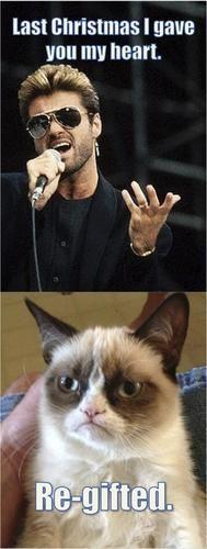 song, grump cat, grumpi cat, grumpy kitty, funny cats, baby cats, christma, grumpy cats, cat memes