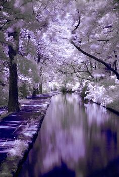 Tudo lilás...
