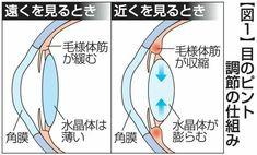 """「目が疲れやすい…」40歳前後から症状 """"老眼""""なぜ起こる(西日本新聞) - Yahoo!ニュース"""