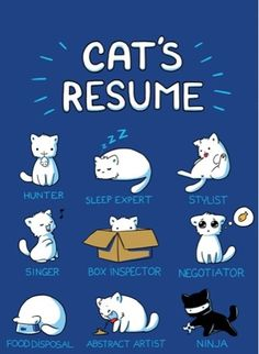 Kitties (´(ェ)`)