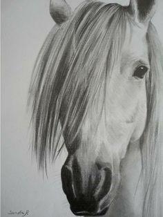 Portrait d'un cheval - Crayon graphite