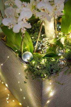 Déco de Noël extérieur : 20 idées lumineuses pour le jardin et la façade - Côté Maison Pearl Earrings, Pearls, Christmas, Ideas Para, Decorating Ideas, Gardens, Xmas, Tree Garden, Pearl Studs