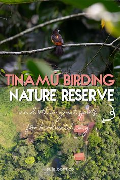 Maybe you know Colombia is the country with more bird species in the world, but do you know where to find them? Click here and get to know the best bird watching spots in Colombia You Know Where, Where To Go, Nature Reserve, Bird Species, Travel List, Bird Watching, Getting To Know, Continents, Conservation