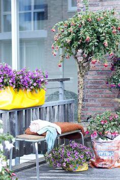 Pflanzenfreude.deが手掛けたtranslation missing: jp.style.庭.modern庭