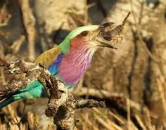 www.wildafricaliv... www.facebook.com/...