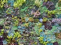 A composition of various sedums creates the foundation of an eye-catching, multi-seasonal bed.