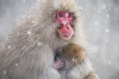 Mother's warmth by Takeshi Marumoto