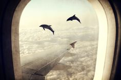 Monday Dream - Flying with My Dolphin Friends Art Print (They are not only in water ocean but in sky ocean too).