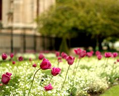 Spring 2012 - Paris by Jad Massabni (via Creattica)