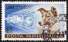 Laika - Simple English Wikipedia, the free encyclopedia