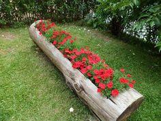 Tronco de árvore  vazado para plantio de flores