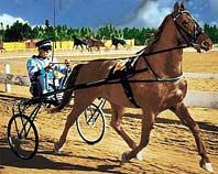 Dan Patch; Famous Standardbred Trotter.