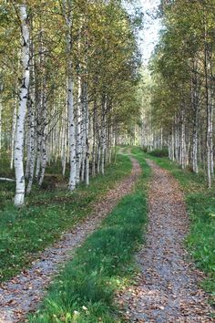 🇫🇮 Lane through the birches in autumn 🍂 (Finland) [photographer unknown] cr. Beautiful World, Beautiful Places, Forest Path, Back Road, Farm Life, The Great Outdoors, Countryside, Paths, Nature Photography