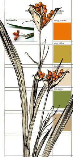 Planet Sam: Colour from the season - Stinking Iris orange