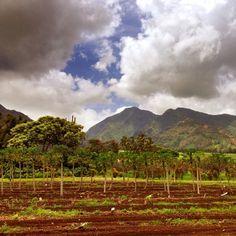 Maui Tropical Plantation in Waikapū, HI