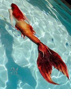 Red Tailed Mermaid