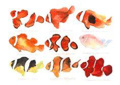 "Amphiprion ocellaris / False Percula Clownfish / ""Kakurekumanomi"" (カクレクマノミ Amphiprion ocellaris: uonofu 魚の譜から) #fish #art #illustration #painting #drawing #fishart #fishillustration #fishpainting #fishdrawing #naturalart #naturalillustration #naturalpainting #naturaldrawing #watercolor #aquarium #fishing #uonofu #YuseiNaagashima"