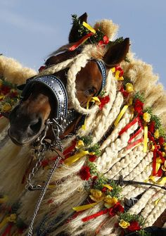 """Since the early century, farmers in the southern town of Traunstein, have taken part in the pilgimage to bless their horses. This tradition, the """"Georgiritt"""" goes back to the legend os Saint George, the horseman's patron saint. Horse Mane Braids, Horse Braiding, Horse Hair, Most Beautiful Horses, Animals Beautiful, Pretty Horses, Horse Photos, Horse Pictures, Draft Horses"""